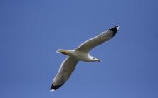 Oiseau du littoral © Cyril Hervé