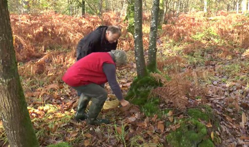 [vidéo] Cueillir les champignons en Ille-et-Vilaine : les bons conseils